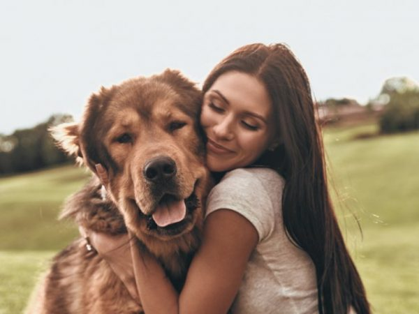 A Guide To Alternative Health For Pets