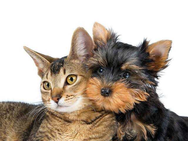 Is Pet Health Insurance For You?